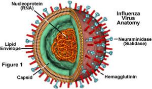 flu stuktur