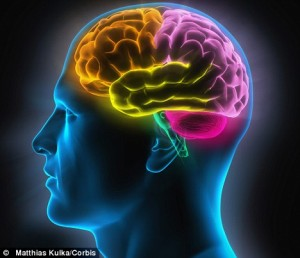 otak manusia, anatomi otak, anatomi kepala, fungsi otak besar, bagian bagian otak, bagian otak dan fungsinya, bagian otak, struktur otak, fungsi otak kecil, fungsi otak, fungsi bagian otak, kemampuan otak manusia, otak